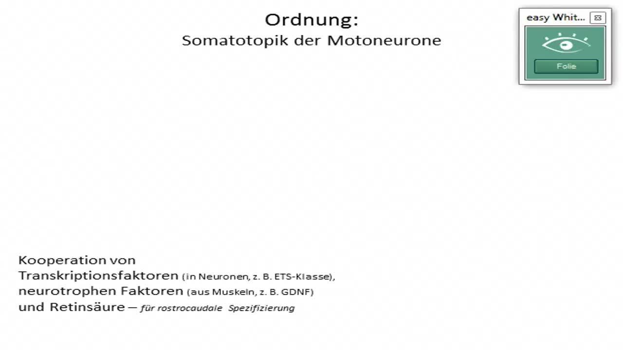 Neuralleiste, Hirnbläschen preview image