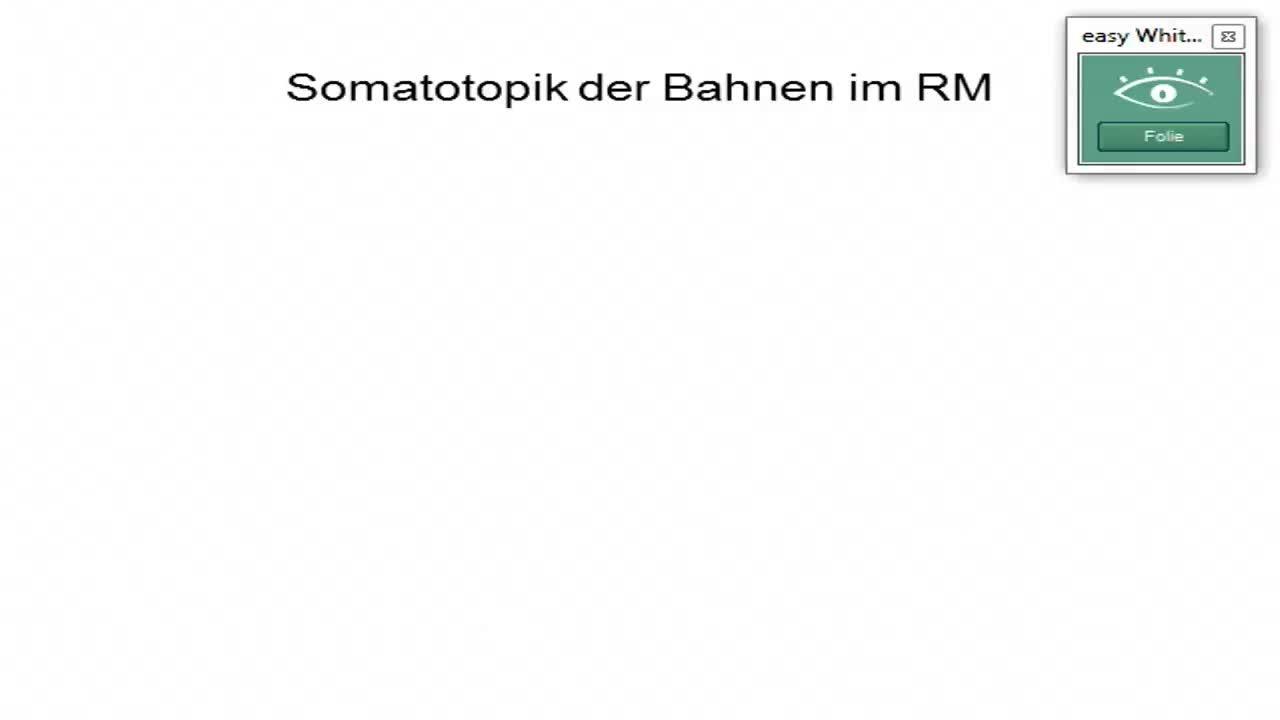 Sensomotorik: Somatotopik der Rückenmarksbahnen; Isokortex preview image