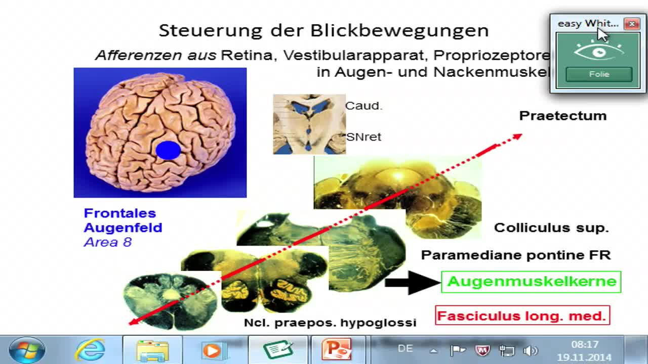 Somatosensorik: Trigeminussystem preview image