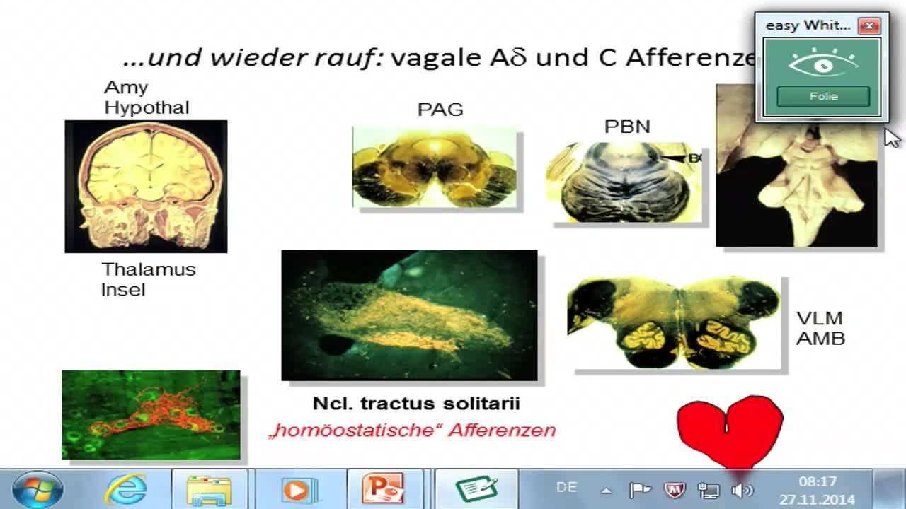 Viszeroafferenzen, Head-Zonen, Aktivierungssysteme preview image