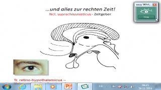 Hypothalamus: Zirkadiane Rhythmik, enokrine und ANS-Verbindungen preview image