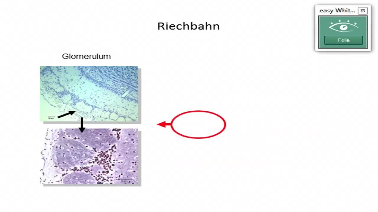 Riechbahn; Geschmack I preview image