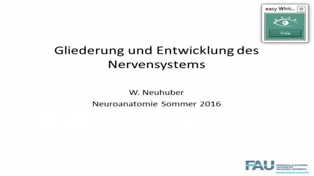 Neuroanatomie: Gliederung des Gehirns und Gefäßversorgung preview image