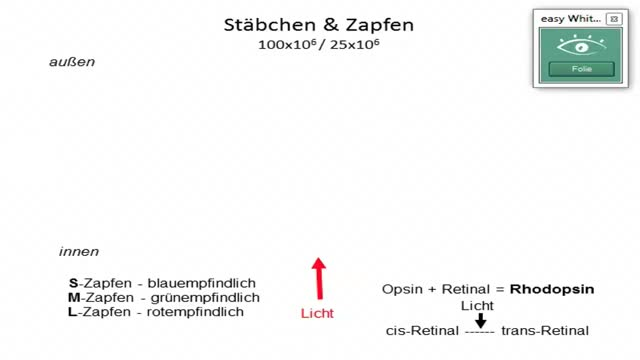 Retinaverschaltung, Sehbahn preview image