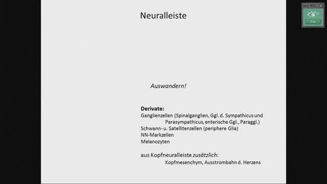 Neuroanatomie - Neuralleiste, Hirnbläschen preview image