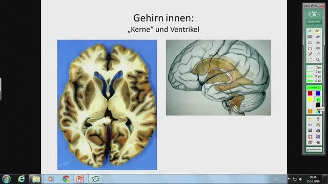 Neuroanatomie - Ventrikel, Plexus choroideus, Blumenkörbchen, Hirnnerven-Einstieg preview image