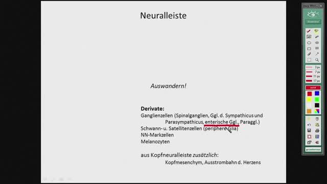 Neuroanatomie - Entwicklung Rhombencepahalon, Kleinhirn preview image